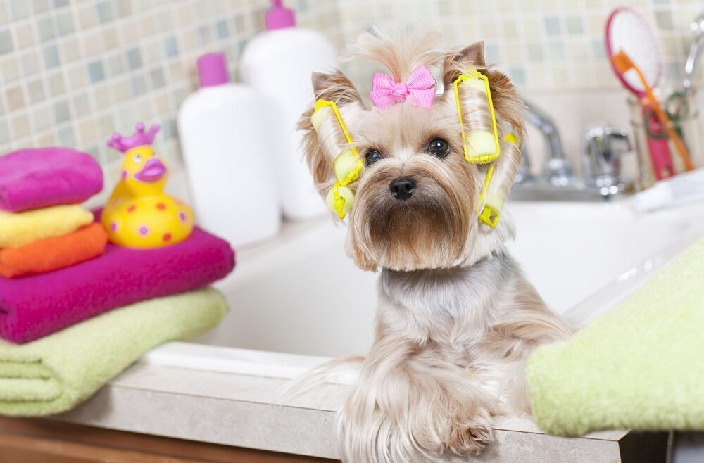 Dragoste cu năbădăi. Cum curățăm firele de păr de la animalele de companie uscator suprafata pisici par manusa curatare companie caini blana animale
